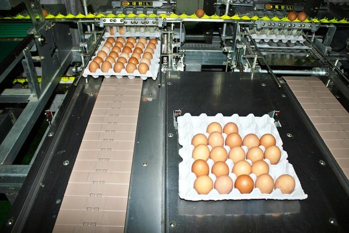 [살충제 계란 대란] '친환경'서 무더기 검출로 신뢰 잃은 정부… 소비자 불안 '여전'
