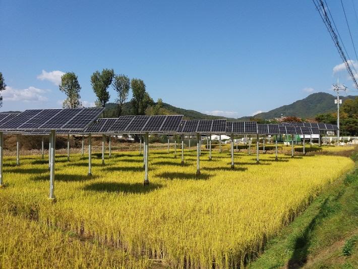 신재생 발전에 부는 '혁신 바람'… 일석이조 누리는 '영농형 태양광'